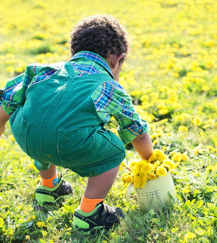 little-boy-in-dandelions-756434_1920